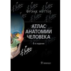 Неттер Ф.   Атлас анатомии человека