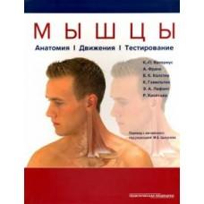 Валериус К.   Мышцы -  Анатомия. Движения. Тестирование