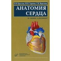 Крылова Н.В.   Анатомия сердца (в схемах и рисунках)